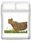Cheetah Hunting Duvet Cover