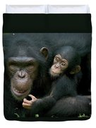 Chimpanzee Pan Troglodytes Adult Female Duvet Cover