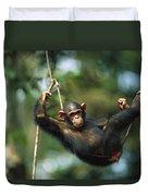 Chimpanzee Pan Troglodytes Resting Duvet Cover