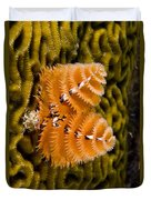 Christmas Tree Worm Spirobranchus Duvet Cover