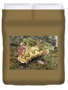 Chromodoris Coi Beige Nudibranch Duvet Cover