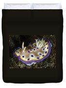 Chromodoris Kuniei Nudibranch, North Duvet Cover