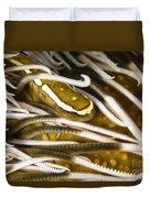 Clingfish On Crinoid, Australia Duvet Cover