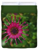 Close View Of A South African Daisy Duvet Cover