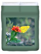 Clouded Sulphur Butterfly Square Duvet Cover