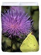 Cloudless Sulphur Butterfly Din159 Duvet Cover