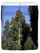 Coast Redwood Duvet Cover