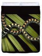 Colubrid Snake Boiga Sp A Flying Snake Duvet Cover