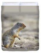 Columbian Ground Squirrel, Banff Duvet Cover