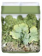 Common Greenshield Lichen Duvet Cover by Ted Kinsman
