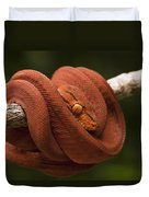 Common Tree Boa Corallus Hortulanus Duvet Cover