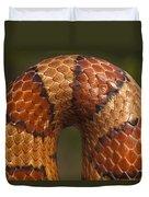 Cornsnake Elaphe Guttata Scale Pattern Duvet Cover