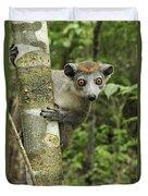 Crowned Lemur Eulemur Coronatus Female Duvet Cover