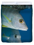 Cubera Snappers Duvet Cover