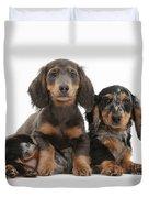 Dachshund And Merle Dachshund Pups Duvet Cover