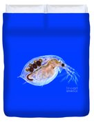 Daphnia With Eggs Duvet Cover