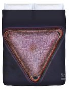 Diatom - Triceratium Formosum Duvet Cover by Eric V. Grave