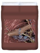 Diatom With Thermophilic Bacteria Duvet Cover