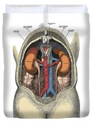 Dissection Of The Abdomen Duvet Cover by Science Source