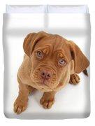 Dogue De Bordeaux Puppy Duvet Cover