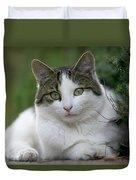 Domestic Cat Felis Catus Portrait Duvet Cover