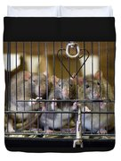 Domestic Rats At The Sutton Avian Duvet Cover