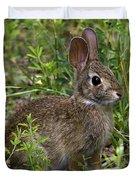Eastern Cottontail Rabbit Dmam005 Duvet Cover