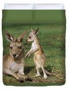 Eastern Grey Kangaroo And Joey Duvet Cover