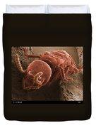 Eastern Subterranean Termite, Sem Duvet Cover by Ted Kinsman