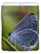 Eastern Tailed-blue Butterfly Din045 Duvet Cover