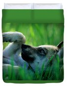 Eight-week-old Captive Gray Wolf, Canis Duvet Cover