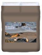 Elephant Seals At Piedras Blancas Duvet Cover