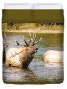 Elk Bugle Estes Lake Colorado Duvet Cover