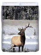 Elk Cervus Canadensis Bull Elk During Duvet Cover