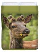 Elk Cervus Canadensis With Dandelion In Duvet Cover