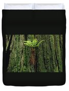 Epiphytic Fern Growing On Redwood Duvet Cover