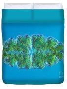Euastrum Sp. Algae Lm Duvet Cover