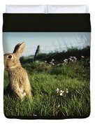 European Rabbit In A Meadow Duvet Cover