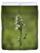 Feathery Reed Canary Grass Vignette Duvet Cover