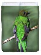 Female Resplendent Quetzal - Dp Duvet Cover