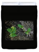 Fern And Coquina Duvet Cover