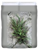 Fern Growing From Crack In Limestone Duvet Cover