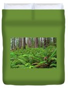 Ferns And Redwoods Duvet Cover