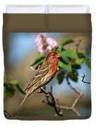 Finch In Lilac Bush Duvet Cover
