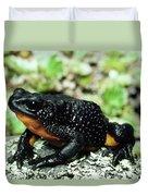 Fire-bellied Frog Atelopus Ignescens Duvet Cover