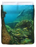 Fish And A Sea Lion In The Water At Los Duvet Cover