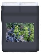 Fresh Young Redwoods On Mt Tamalpais Duvet Cover