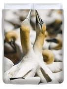Gannets, Parc National De Duvet Cover by Yves Marcoux