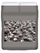 Gannets Showing Fencing Behavior Duvet Cover