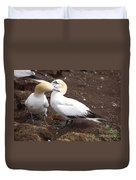 Gannets Showing Mutual Preening Behavior Duvet Cover